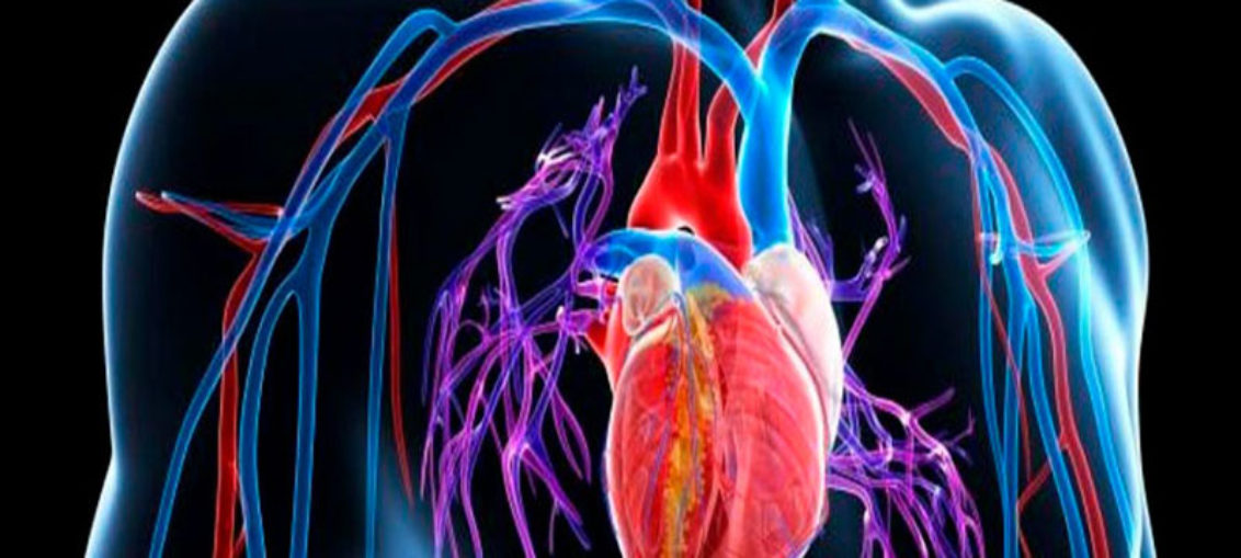 Células madre donadas: opción para corazón infartado