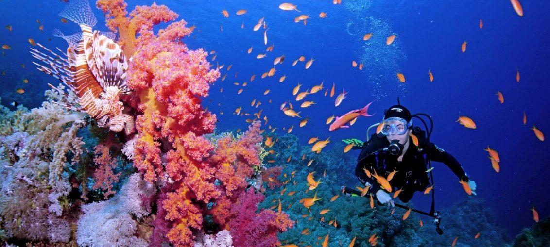 Líderes mundiales, al rescate de los arrecifes de coral