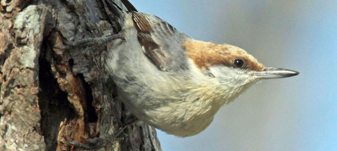 Avistan ave creída extinta tras huracán Matthew