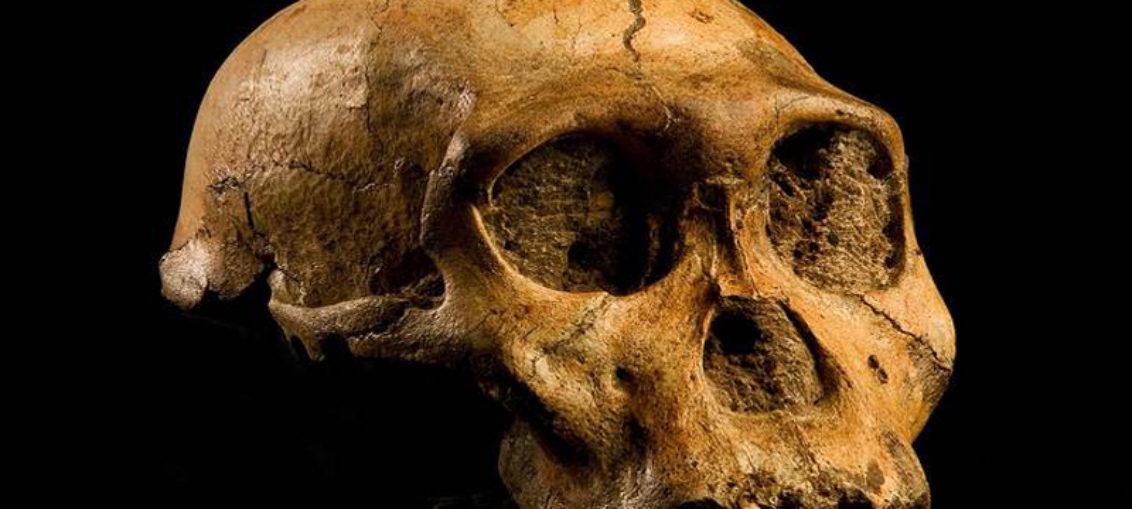 Error genético hizo evolucionar el cerebro humano