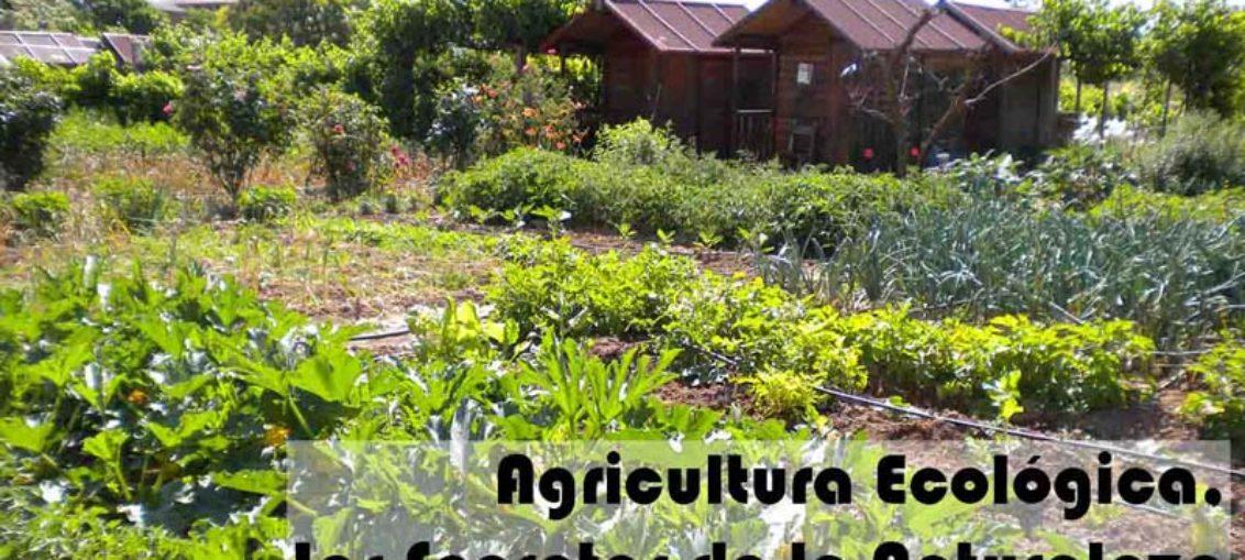 Agricultura ecológica, amigable con el medio ambiente