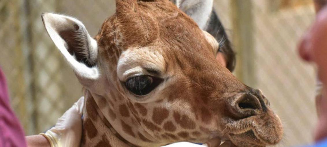 Alarma por muerte de animales en zoológico argentino