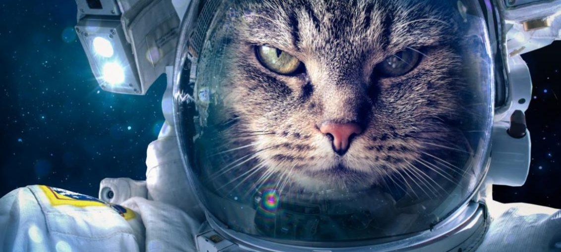 Los animales que viajaron al espacio