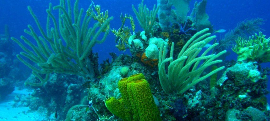Cambio climático modifica composición de arrecifes