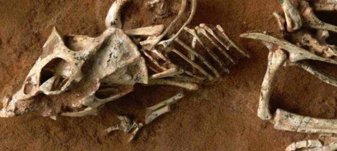 Encuentran restos de nueva especie de dinosaurio