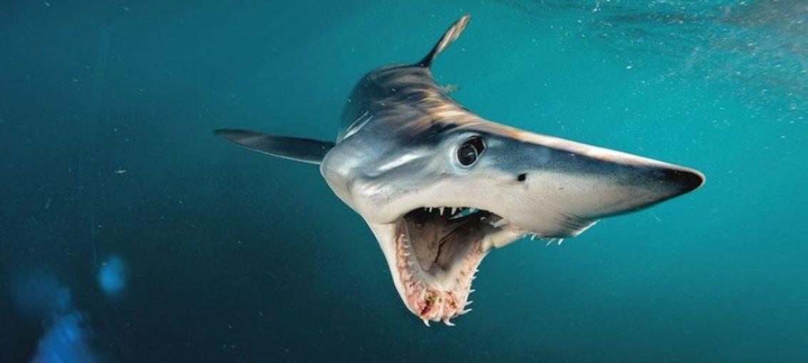 Ataque de tiburón deja un muerto en Massachusetts