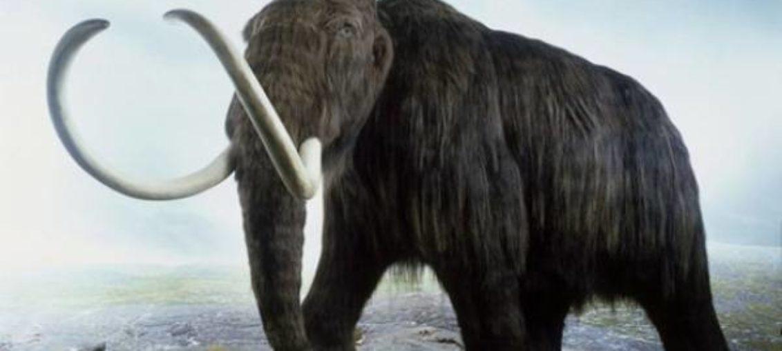 Hallan en Cape Coral posible colmillo de mamut