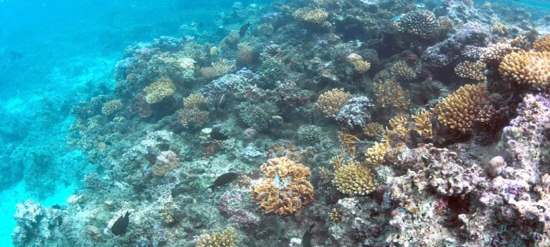 Los corales de aguas profundas también tienen estrés