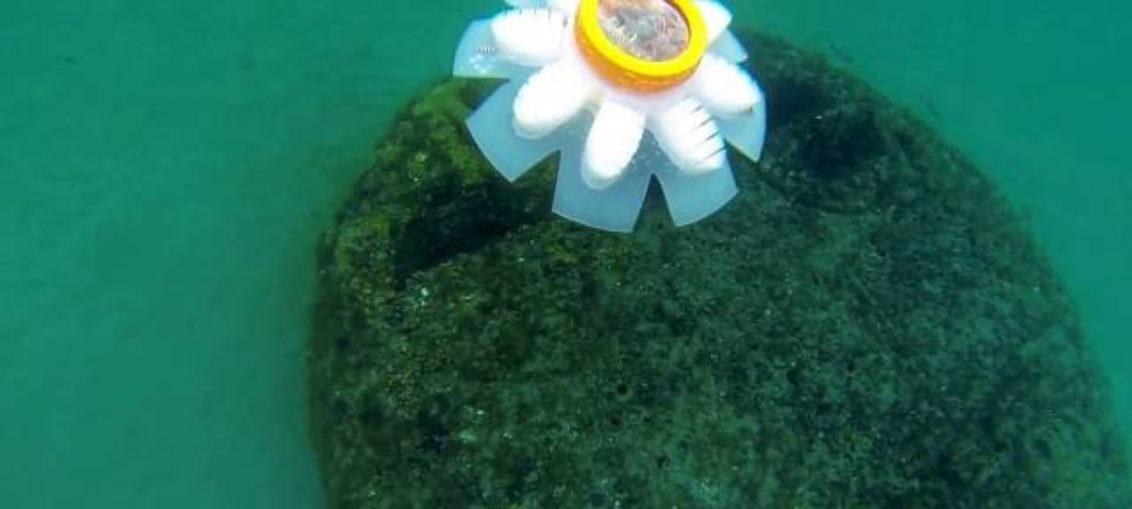 Medusas robot para cuidar los océanos