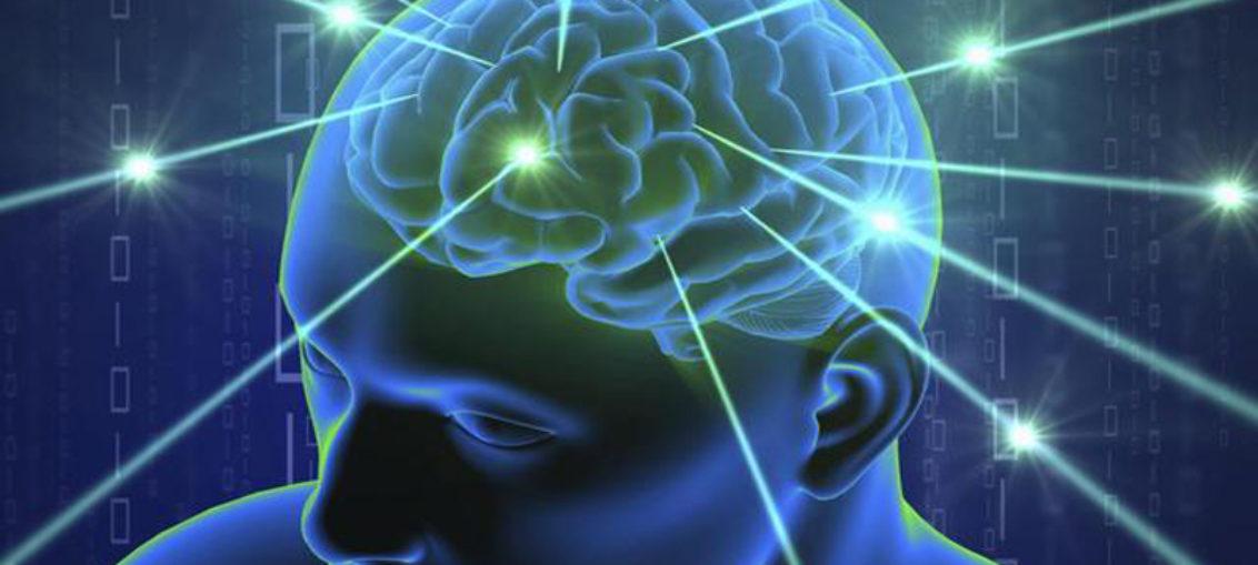 Por qué el cerebro humano es tan grande