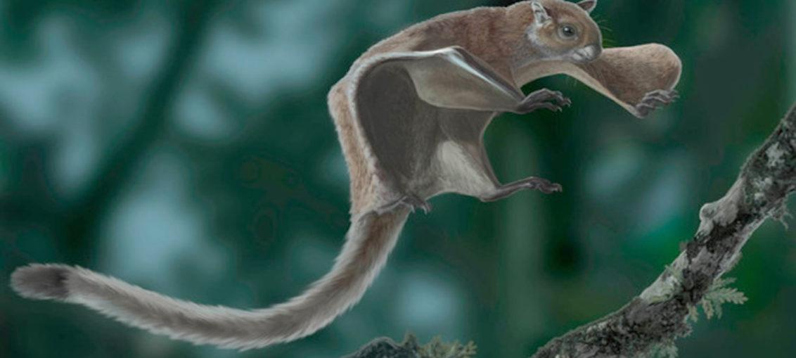 Descubierto fósil más antiguo de ardilla voladora