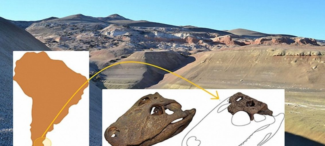 Hallan fósil de caimán de hace 65 millones de años