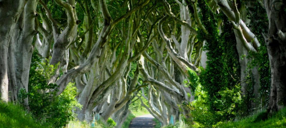 Dark Hedges, el camino del Rey de Juego de Tronos