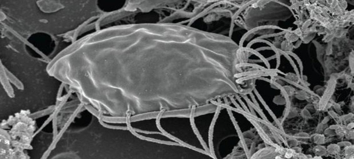 Investigadores canadienses descubren un nuevo tipo de organismo